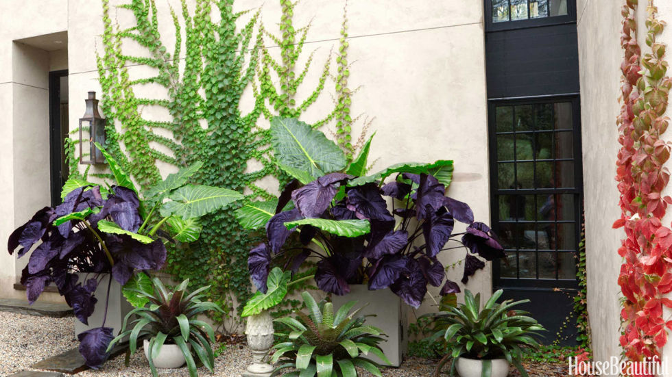 Large leafy plants make an eye-catching garden by the front door of a modern home in upstate New York.<br />